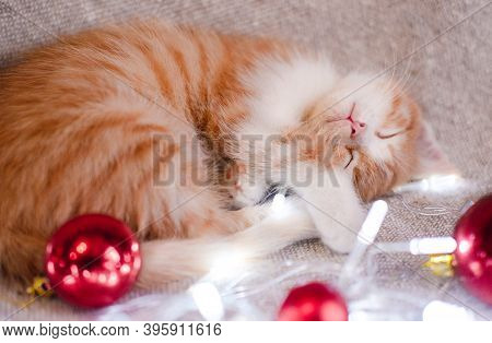 A Small Domestic Red Kitten Curled Up On A Gray Blanket And Quietly Sniffs With Closed Eyes. A Cute