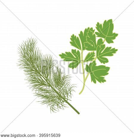 Dill And Parsley, Fresh Herbs. Healthy And Wholesome Food. Improving Immunity, Diet, Weight Loss. Sp