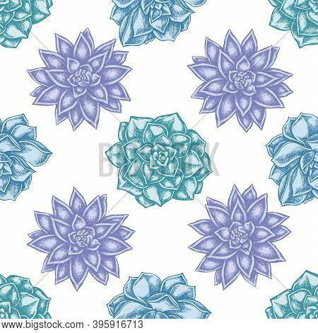 Seamless Pattern With Hand Drawn Pastel Succulent Echeveria, Succulent Echeveria, Succulent Stock Il
