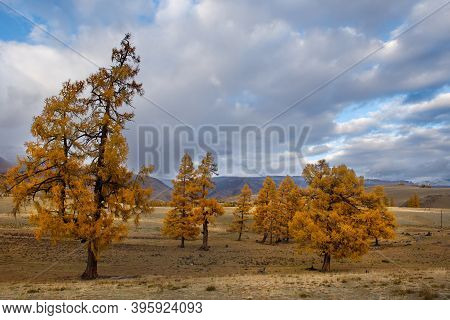 Russia. Mountain Altai. Desert Steppes At The Foot Of The North Chui Mountain Range Along The Chui T
