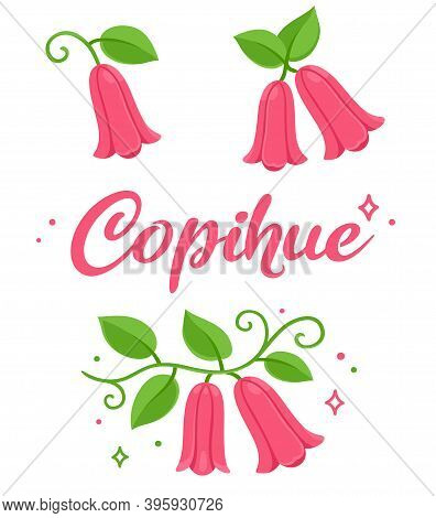 Copihue, Chilean Bellflower, National Flower Of Chile. Illustration Set. Vector Clip Art Isolated On
