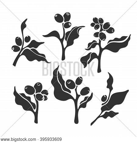 Plant Set. Vector Coffee Branch. Art Symbol. Tropical Aroma Bean, Botanical Tree, Leaves. Nature Col