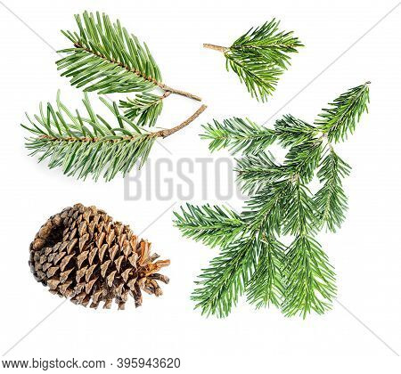 Set Of  Fir Tree Branches And Pine Cone Isolated On White Background. Pattern. Christmas Tree, Winte