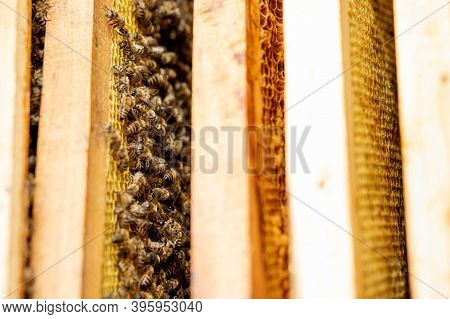 Bee Hives In Care Of Bees With Honeycombs And Honey Bees. Beekeeper Opened Hive To Set Up An Empty F