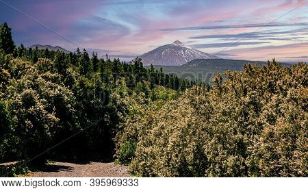 Mount Teide In The Teide National Park Surrounded By Pine's Forest