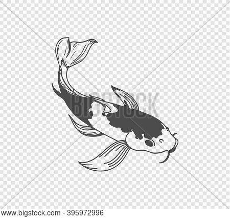 Carp Sketch On Transparent Background. Freehand Japanese Carp Tattoo. Vector Illustration