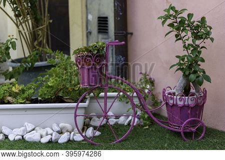 Old Vintage Three-wheeled Bicycle Colored In Pink And Transformed Into A Flower Pot Holder.