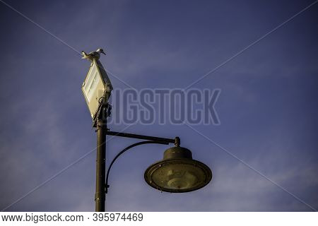 Street Lamp With Seagull And With Two Types Of Lamps, Vintage And Modern Spotlight. Blue Sky Backgro