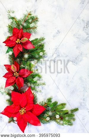 Christmas Composition With Fir Twigs And Poinsettia Flowers With Copy Space. Flat Lay, Top View. Fes