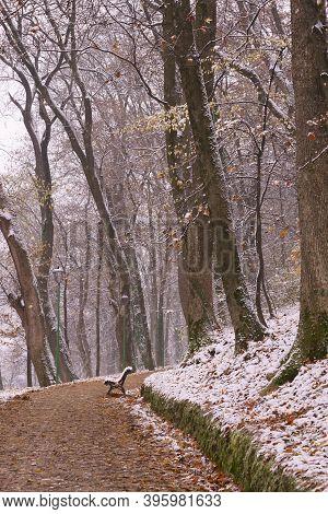 Winter On A Forest Alley, Brasov, Transylvania, Romania