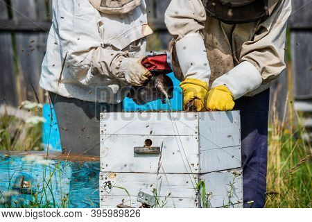 Eco Apiculture And Honey Production Business. Beekeeper Fumigating Bees With Smoke To Remove Honeyco