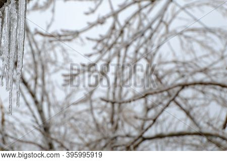 Freezing Rain. Blurred Icy Tree Branches After An Icy Rain. Natural Disaster. Selective Focus On The