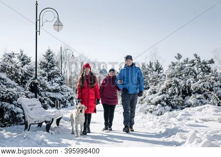 Family With A Larbrador Dog Walking In A Snowy Park On A Nice Winter Day. Father, Mother And Daughte
