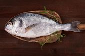Delicious seafood background. Fresh sea bream on wooden plate with fresh rosemary. Culinary fish eating. poster