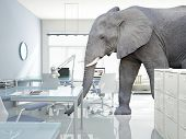 huge elephant walk in modern office poster