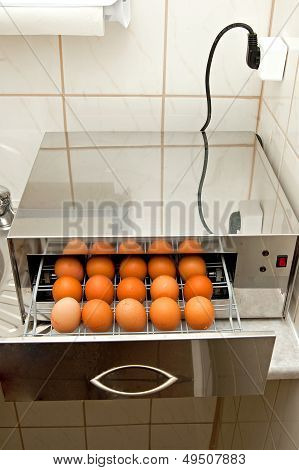 Disinfection Of Eggs