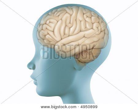 Brain In Profile Head