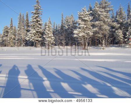 Winter Arctic