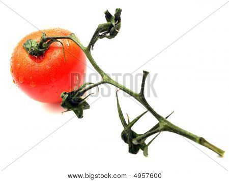 Isolated Tomato Closeup - Focus On Tomato