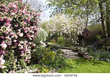 Typical English Garden in spring time with magnolia trees and lawn poster