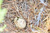 broken egg in the nest poster