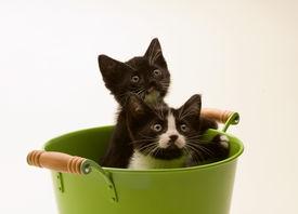 Kittens In Bucket
