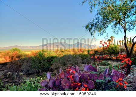 Beautiful desert landscape view Tucson Arizona  Travel poster