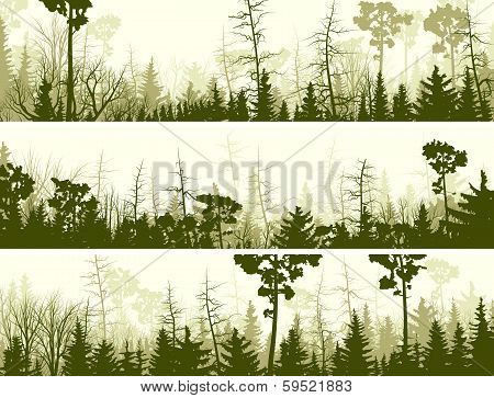 Horizontal Banners Of Coniferous Wood.