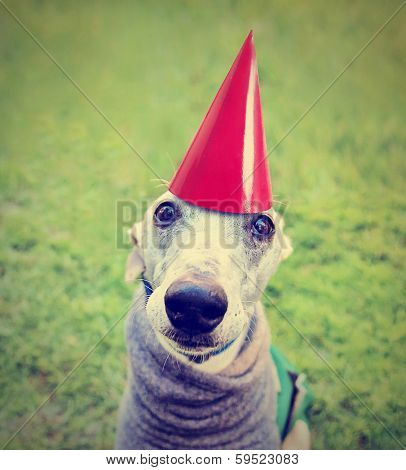 a cute dog in a local park with a birthday hat on done with a retro vintage instagram filter
