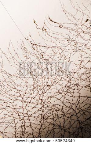 Natural Net