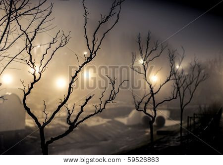 tree in a park at the night fog poster