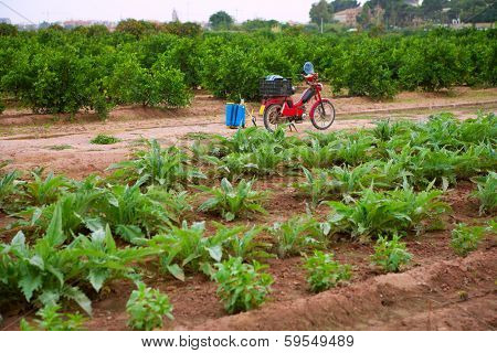Godella Valencia garden field smallholding traditional agriculture in Spain