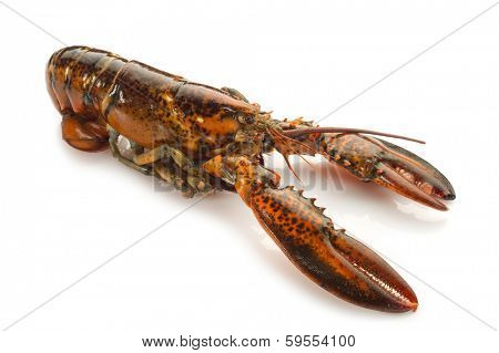 lobster on white