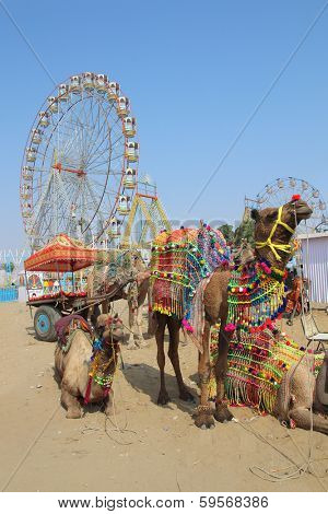 ornate camels and ferris wheels at Pushkar camel fair - India poster