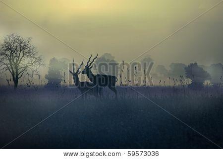 Black Buck Silhouette
