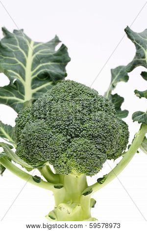 resh raw broccoli