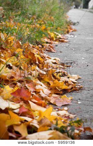 Leaves On Street