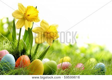 Easter eggs on meadow with daffodil flower