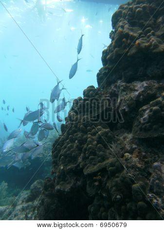 Fish on the Ocean Reef
