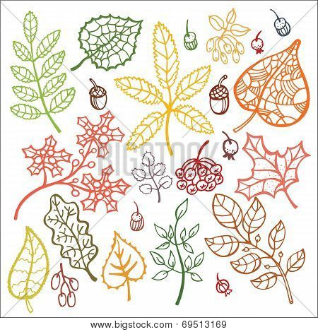 Autumn Leaves And Berryes Conposition