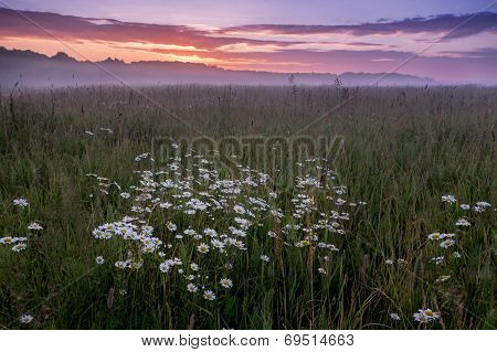 Natural Looking Landscape With Sunrise Above Field With Chamomiles
