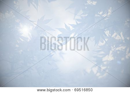Mourning Background With Maple Leaves And Light In Shades Of Grey