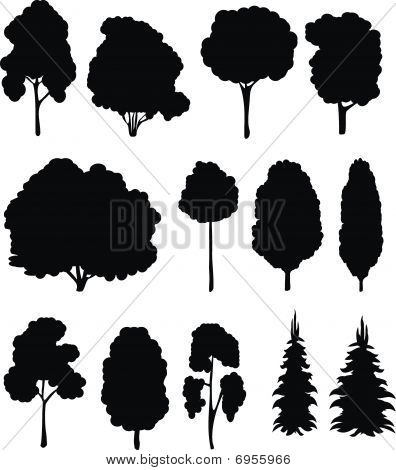 Trees. Vector set.