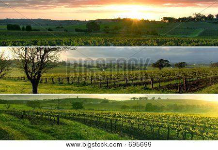 Vineyard Panorama's