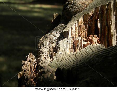 Light Falls On An Old Tree Stump