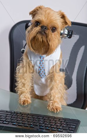 poster of Dog breed Griffon Bruxellois sits near the computer headphones