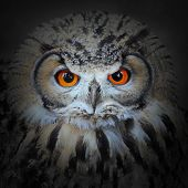The evil eyes. The Eagle Owl, Bubo bubo. poster