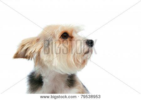 sad friendly dog