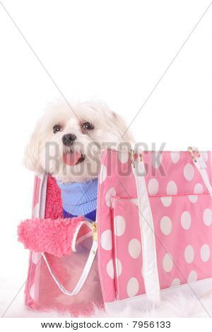 poster of shot of a happy doggy travel tote
