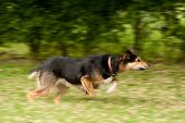 motion blur of a large dog running poster
